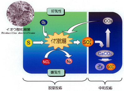 硝酸性窒素処理の原理